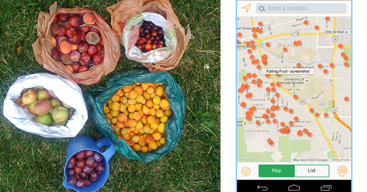 Find Free Fruits with This app